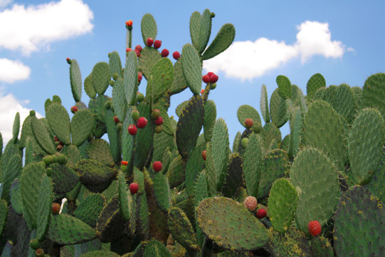this is why eating nopal cactus can knock the weight right off, Skeleton