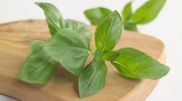 Eating Basil Produces These Amazing Results In Lowering High Blood Pressure