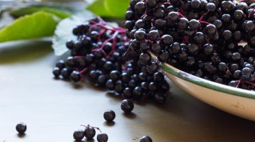 Do Elderberries Heal The Flu? This Answer Will Surprise You…