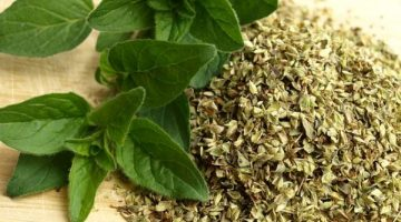 Using Oregano Is A Near Perfect Response To Fighting Cancer
