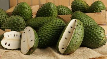 What Soursop Does To Cancer Is Really Impressive