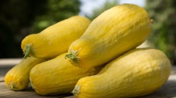 Eating Yellow Squash Could Keep You From Becoming Sick