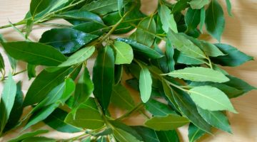 This Is Exactly Why Eating Bay Leaves Puts Heart Disease In Check