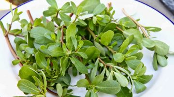 Purslane Could Be An Excellent Choice In Fight Against Cancer