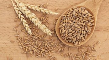 This Is A Great Explanation On Why People Should Choose Spelt Over Modern Wheat