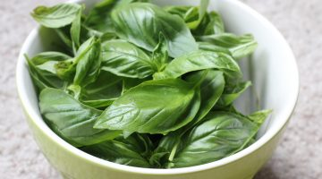 Eating Basil Could Do Wonders In The Fight Against Tuberculosis, According To Researchers