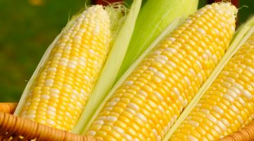 You May Never Eat Corn Again After Reading These 7 Terrifying Things About The Vegetable