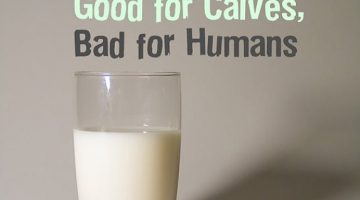 10 Horrifying Facts About How Drinking Cow's Milk Can Destroy Your Health