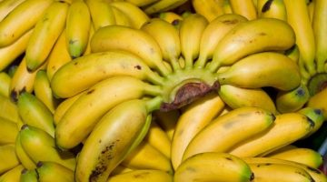 9 Untold Health Benefits Of Burro Bananas That Must Be Told To The Masses