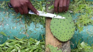 Here Are 9 Reasons You May Want To Know The Health Benefits Of Eating Nopales